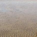 Coastal 02 – Morecambe Bay, UK – Inter-Tidal Sands & Cockle Habitats.