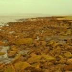 Coastal 03 Morecambe Bay UK Saltmarsh